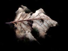 Surreal Leaf Particle Stock Illustration