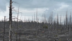 Dead Forest near volcanoes. Kamchatka Stock Footage