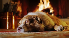 Dog lies on a background of a fireplace with firewood and buckets. Coziness and Stock Footage