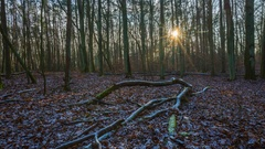 Winter forest 4k timelapse Stock Footage