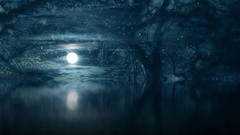Fantasy spooky moonlight magical woodland scene Stock Footage