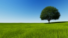 FullHD Tree on a green hill on clear sky Stock Footage