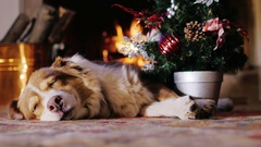 All receive gifts for Christmas. Even a pet dog Stock Footage