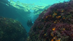 Scuba diver swimming towards camera Stock Footage