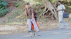 Tourists Men Girls Walk Watch Feed Monkey on Pathway in Park Stock Footage