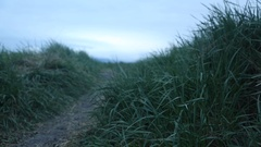 Path through grassy field, Iceland Stock Footage