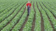 Farmer or agronomist walking in soy field Stock Footage