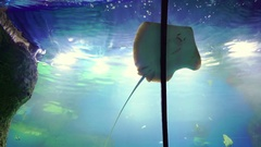 Children having fun and looking on stingray in large Aquarium Stock Footage