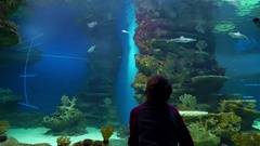Young boy watching the underwater world in a large aquarium Stock Footage