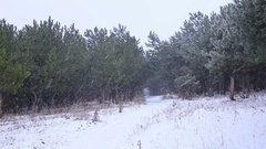 Winter forest, Falling snow in a winter park with snow covered trees Stock Footage