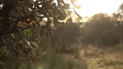 Bush against Sky, Moving, Fog - Tripod - Morning Woods Stock Footage