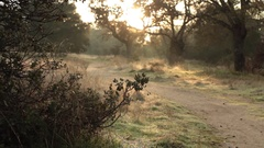 Bush Path - Foreground Focus,Tripod - Morning Woods Stock Footage