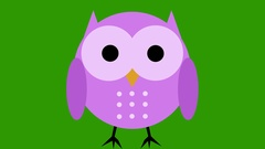 Comic cartoon cute owl animation green screen cut out loop Stock Footage