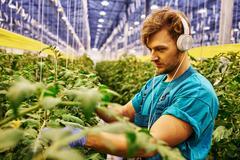 Friendly farmer working on hydraulic scissors lift platform in greenhouse Stock Photos