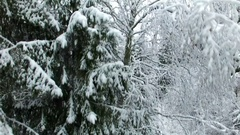 Ascending Aerial Of Woods In Winter Stock Footage