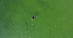 Aerial view of scuba diver shows crab at shallow depth in sea 4k Stock Footage