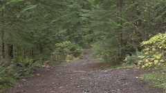 A scenic forest mountain biking trail on a mountain , super slow motion. Stock Footage