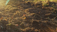Cultivating a plot with an electric garden tiller Stock Footage