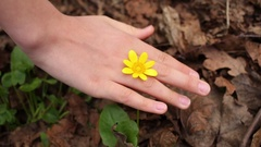 The child holds and removes hand from yellow flower in the forest Stock Footage
