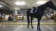 Brown horse in the saddle is in the underground parking Stock Footage
