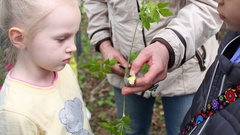 Woman shows for children young branch of tree with bark peeled Stock Footage