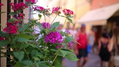 Pink flowers decorate the bright street on a sunny day Stock Footage