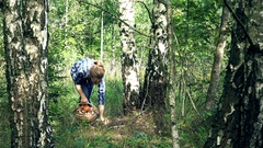 Woman walk and find red cap boletus mushroom under birch tree Stock Footage