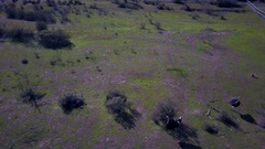 Aerial Drone Footage of Ostrich farm in Solvang, CA Stock Footage