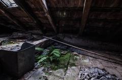 Fern loft Stock Photos