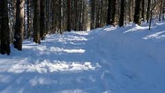 Walking in the woods in snowy winter, steadicam shot Stock Footage