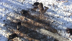 White-tailed Deer and Turkeys from Above in Treestand in Winter Stock Footage
