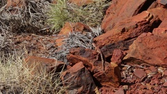 Lizard relaxing in the sun on red rock Stock Footage
