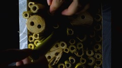 Mason bee house Stock Footage