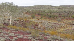 Dry red earth and spinifex grass in Pilbara Stock Footage