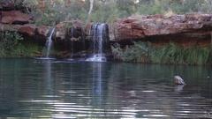Fern pool in Dales Gorge Karijini NP Stock Footage