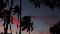 Sunset with pink clouds and palm trees Stock Footage
