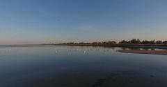Aerial view Birds seagulls soar to sandbar on salt lake 4k Stock Footage