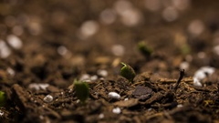 Time Lapse Video of Vegetables Growing from Seed Stock Footage