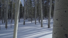 Kenosha Pass Colorado Mountain Aspens Stock Footage