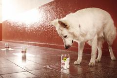 Field identification of victim odor traces by police dog on location Stock Photos