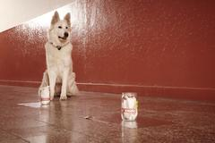 Positive identification of victim odor traces by police dog on location Stock Photos