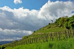 Vineyard in Maribor, Slovenia Stock Photos