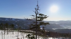 Tree Mountains Panorama Aerial 4k Stock Footage