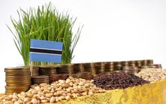 Botswana flag waving with stack of money coins and piles of wheat and rice .. Stock Photos