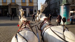 Pov view of riding two horse carriage around main square in old city centre Stock Footage