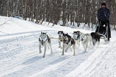 Male musher drives dog sledding (dog sled) on winter forest Kuvituskuvat