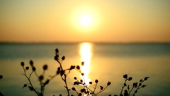 Sunrise or sunset over sea or river with a silhouette of plant Stock Footage