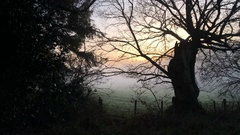 Pan across misty foggy Norfolk countryside to small country road Stock Footage