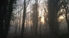 Misty and foggy forest in Norfolk countryside - United Kingdom Stock Footage