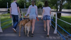 Three young people goes to stairs with two dogs Stock Footage